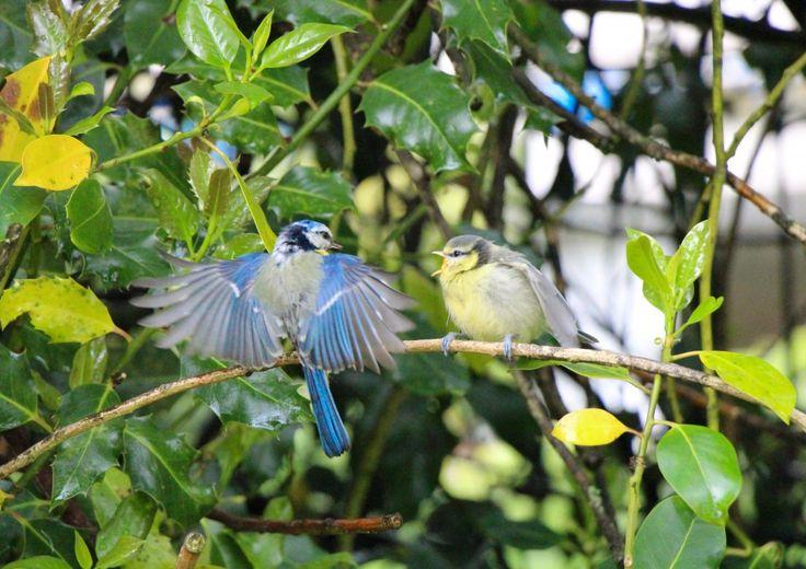 Birds & love