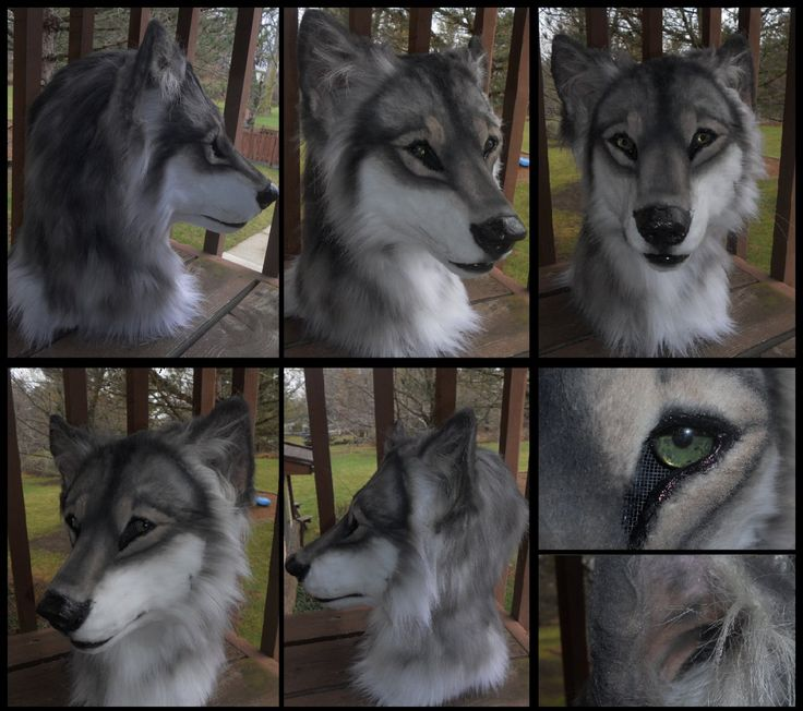 wolf fursuit - Google zoeken