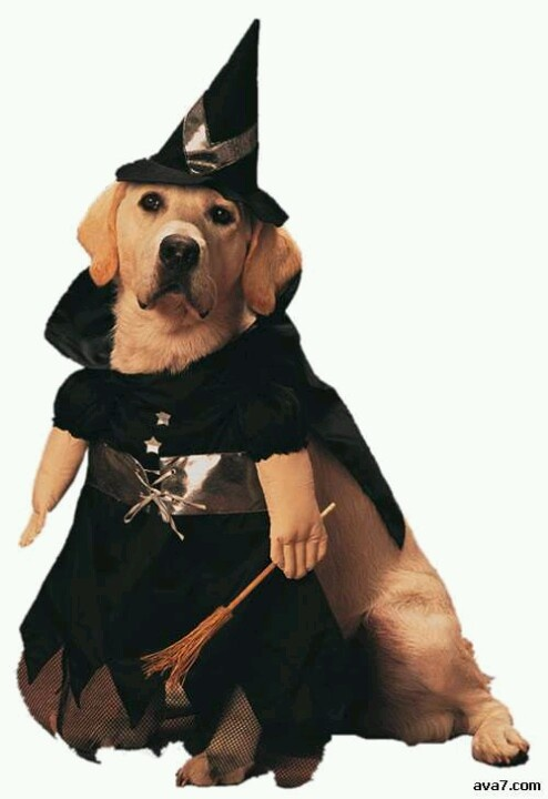 One Pet Witch Dog Halloween Costume For Medium Dogs