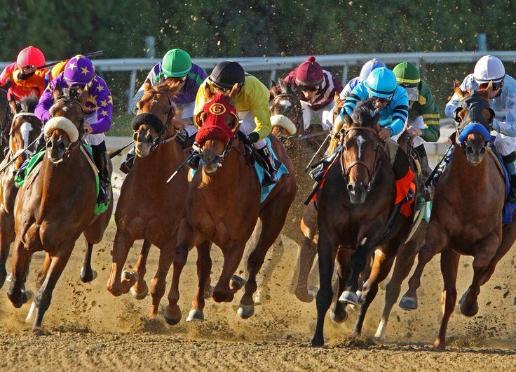 horses running wallpaper - Căutare Google