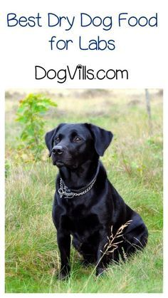 What is the best dry dog food for labs? Here's a hint: it's not about the brand, it's about the ingredients! Learn more!
