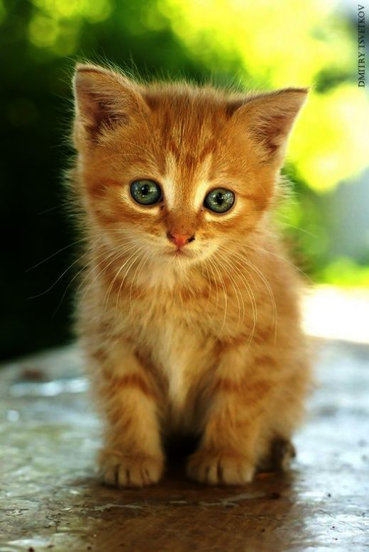 Cute Hawaiian Names For Cats whether Cute Animals To Draw