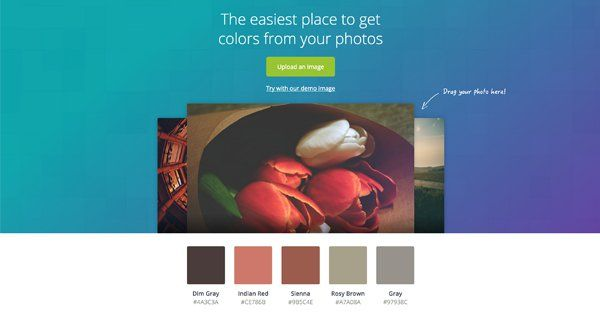 Canva's Color Palette Generator - The easiest place to get colors from your photos
