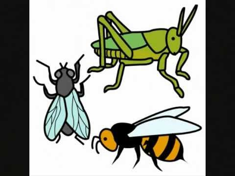 Los insectos - Documental para Niños - YouTube