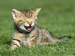 Un gato doméstico y su #felicidad cuando pone sus patitas por primera vez en el campo, con todos esos bichejos para poder cazar