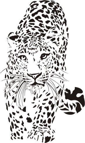 Dzikie koty 28 - lampart