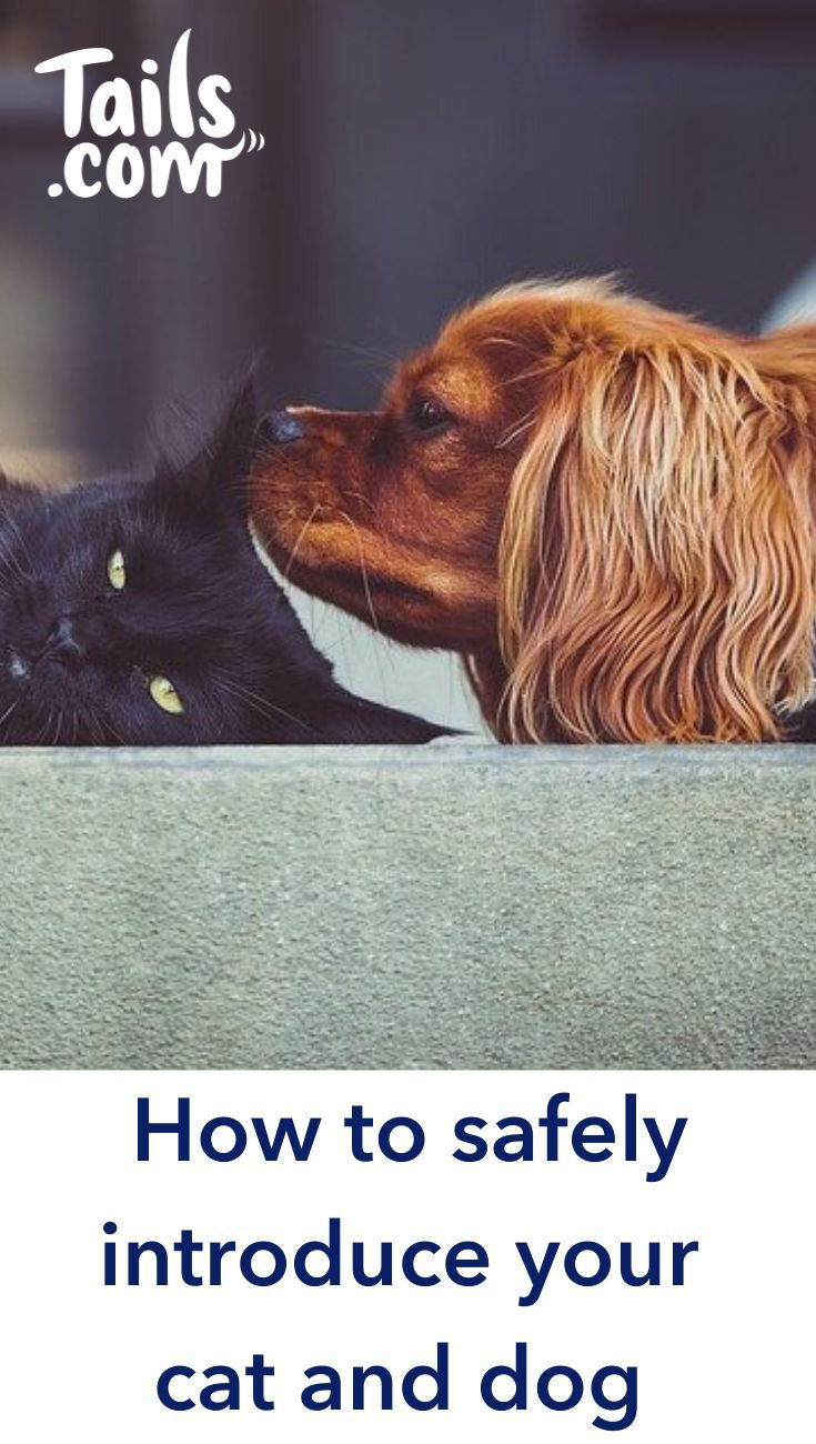 How To Safely Introduce Your Cat And Dog In 2020 Cute Dogs Dogs Dog Mom