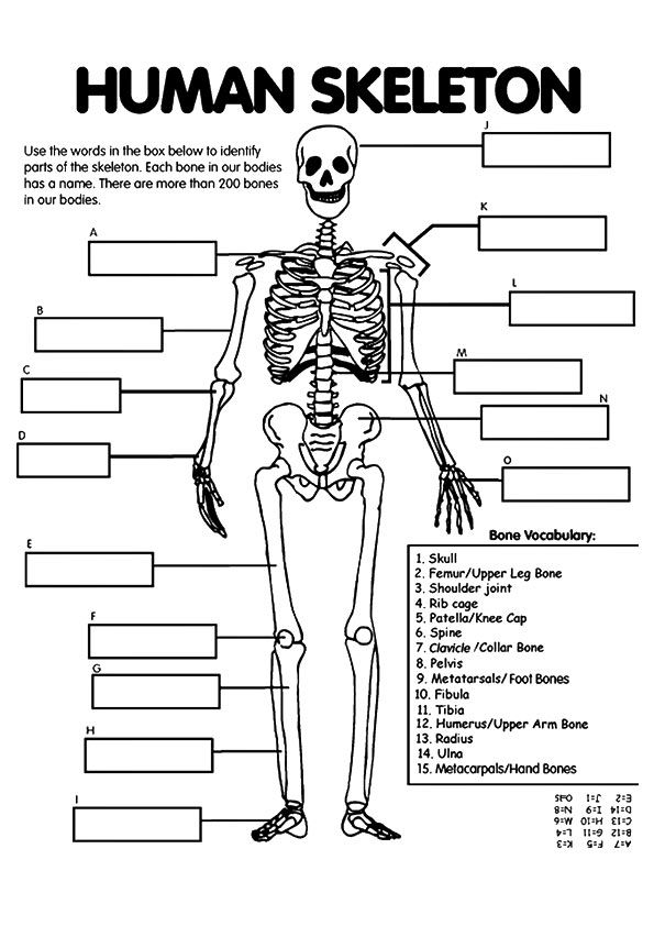 The Kidney Anatomy Coloring Page Human Body Unit Human Body