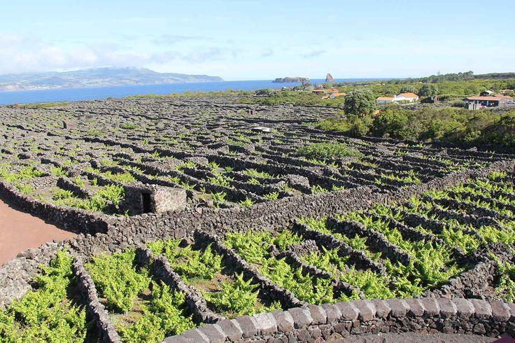 Vineyard culture, Pico Island, Azores. Photo by Leila Monteiro Lins. DISCOVER magazine.