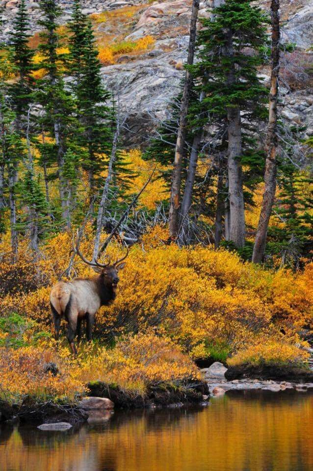 Beautiful Estes Park, CO wildlife and Autumn scenery.