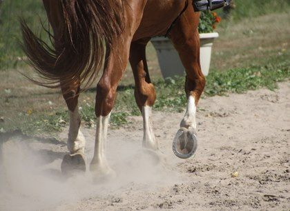 A roundtable at the International Hoof Care Summit covered shoe wear and what it indicates about the horse. #HoofSummit2017 #hoofcare #TheHorse #shoeing