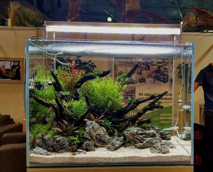 Aquarium Aquariumdriftwood In 2020 With Images Fresh Water