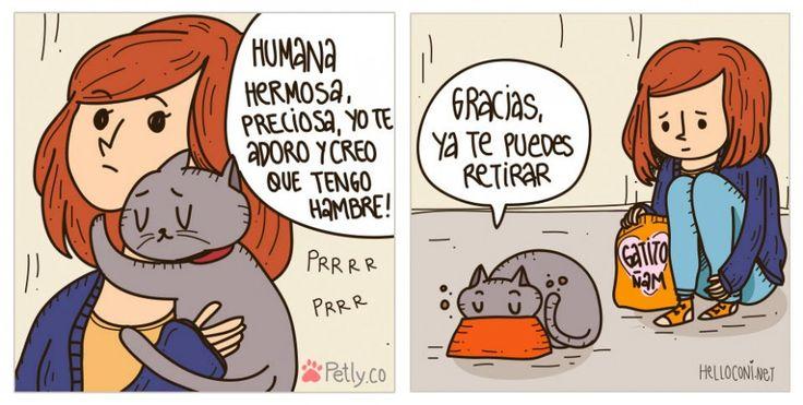La verdad sobre los gatos