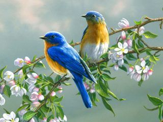 Beautiful birds flower top hd new wallpaper