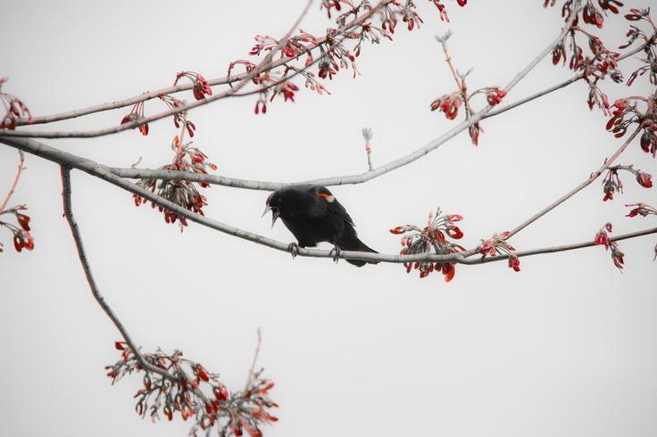Crabby Crow