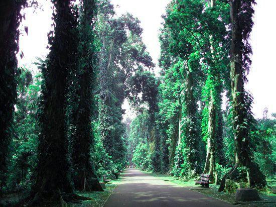 tempat wisata di Bogor yang menarik untuk dikunjungi dan tentu harganya sangat terjangkau oleh semua kalangan. #wisata #bogor