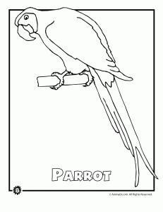 Endangered Parrot Animal Coloring Page