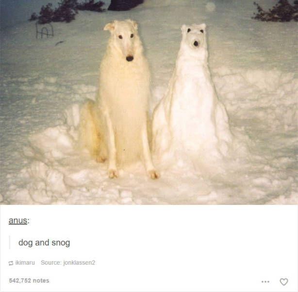 A Very Humorous Tumbler Dog Dump   http://ift.tt/2evn7yq via /r/dogpictures http://ift.tt/2fqfZZ6  #lovabledogsaroundtheworld