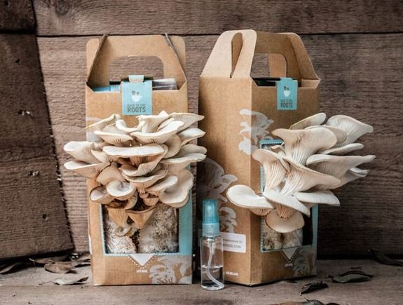 how to grow your own oyster mushrooms in used coffee grounds at home DIY tutorial step by step instructions, How to, how to do, diy instructions, crafts, do it yourself, diy website, art project ideas