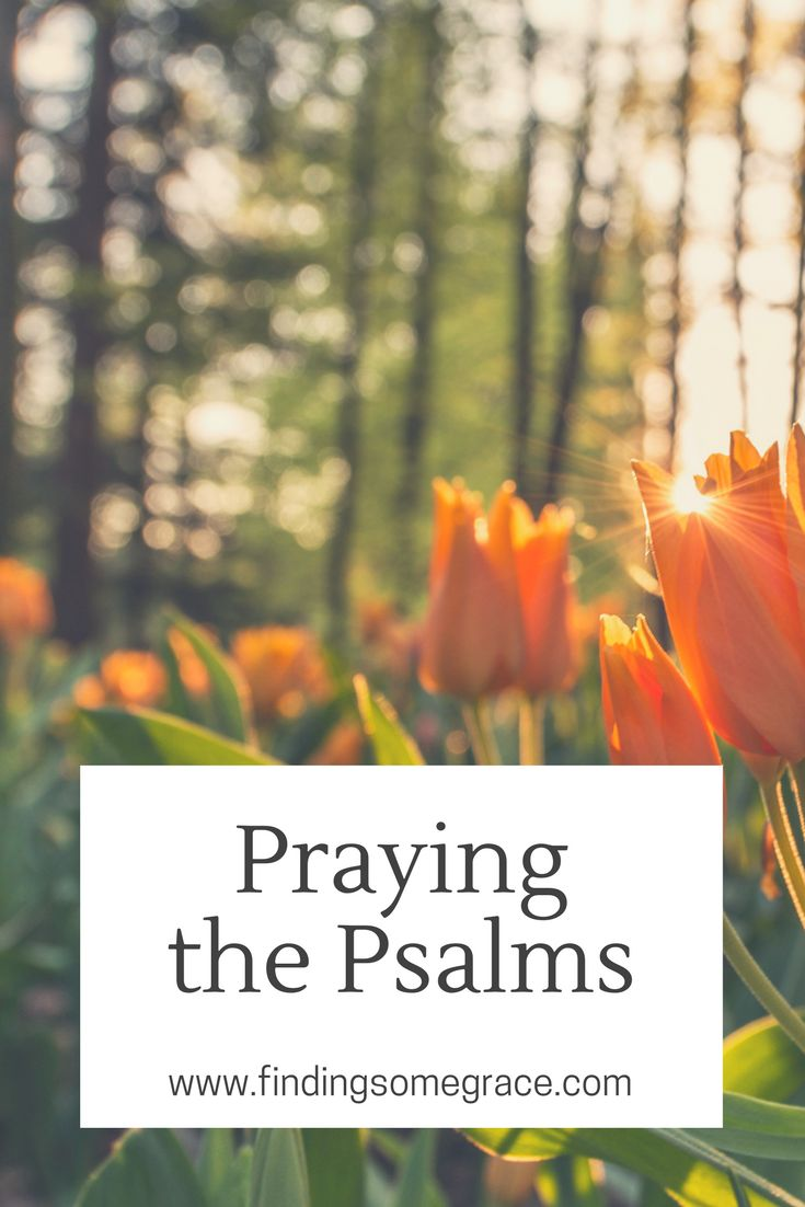 Have you ever tried praying through the Psalms? This book found in the Hebrew Bible gives us real, honest, thorough examples of how to pray.