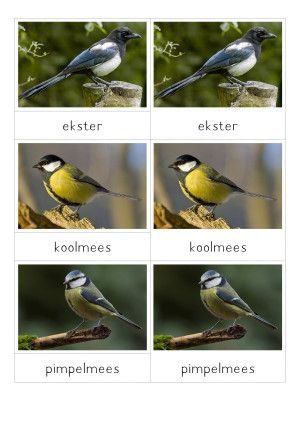 legwerkje vogels (in de winter) - MontessoriNet