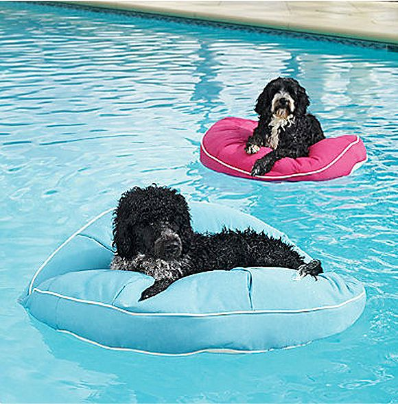 Wonderful Pool Finish Ideas For You To Copy: 17+ Best Images About I Love My Yorkie Poo. On Pinterest