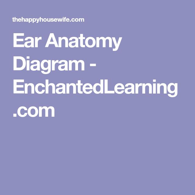 ear anatomy diagram projects 6m fishbone diagram projects