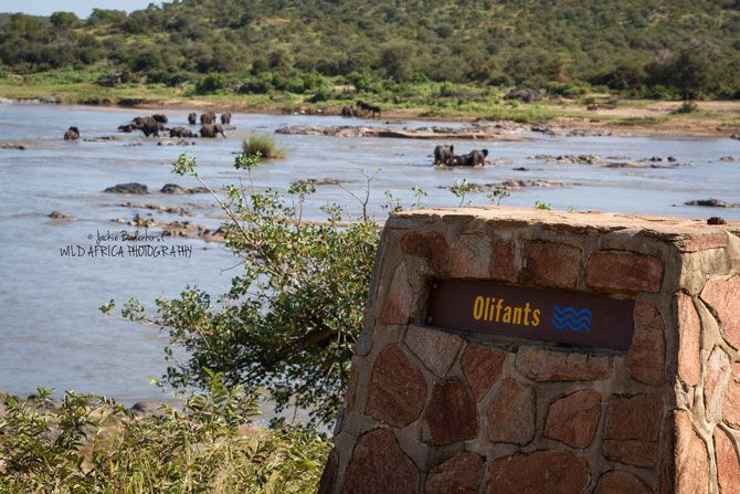 A truly spectacular site as multiple breeding herds descend on Kruger's Olifants River for an elephantastic pool party!Read more ›