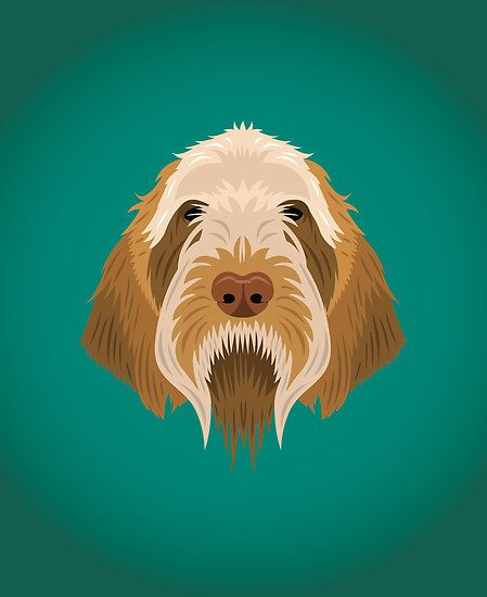 love this depiction of the wonderful dog that is a Spinone!