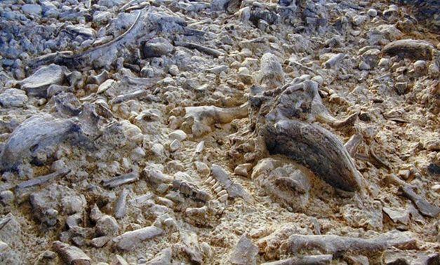 Importante sito Paleolitico a Isernia Molise Italia   Si tratta di una serie di suoli antichissimi, sovrapposti, che arrivano ad una profondità di 6 metri e che sono la diretta testimonianza di una frequentazione stagionale ma ripetuta nel tempo dell'uomo paleolitico.