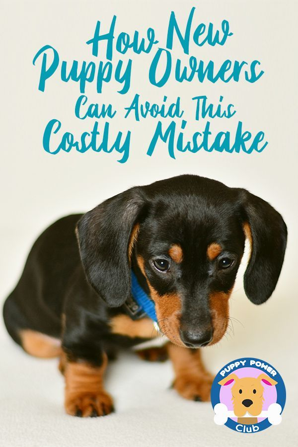 How New Puppy Owners Can Avoid This Costly Mistake Training Your