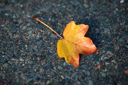 Een blad op steen, extreem simpel, maar hierdoor wordt wel direct het onderwerp duidelijk. Het steen en blad contrasteren met elkaar door kleur, maar ook door 'hardheid'.
