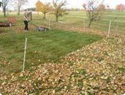 Mulch Leafs to Feed Lawn