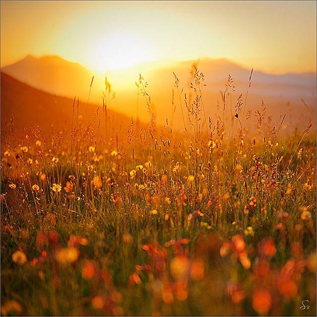 Poppies in #Italy, #Basilicata #Tramonti #Italy