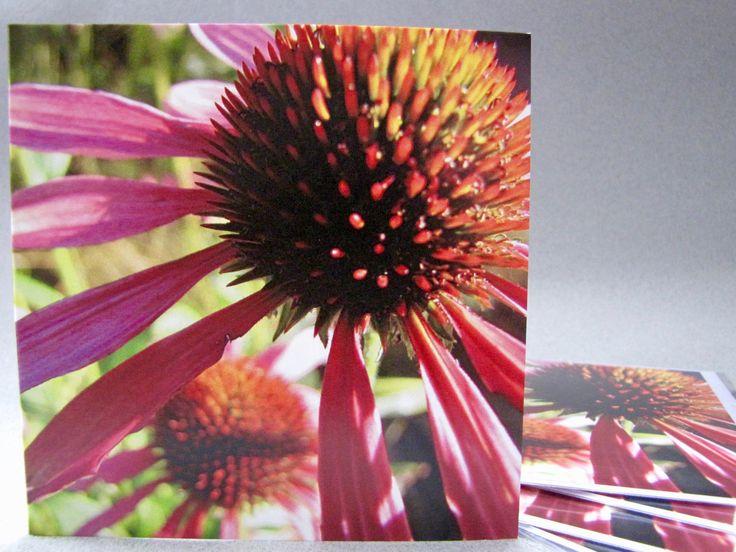 Echinacea purpurea botanical photo Blank greeting card by HostasAndGarden on Etsy
