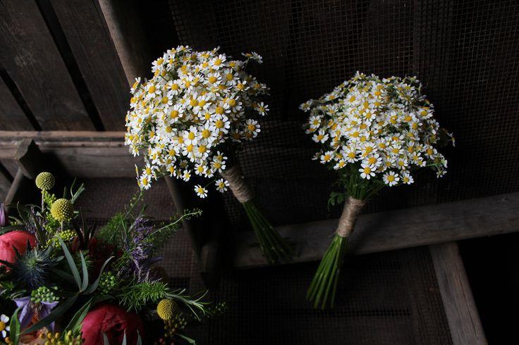 Gathered daisy posies - www.theflowermilldraycott.co.uk