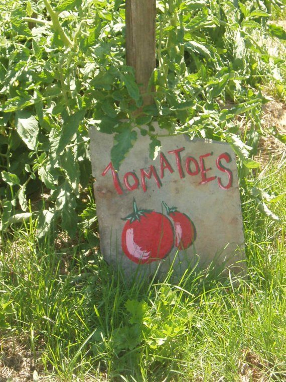 Tomato Garden Slate Sign By Fernwold On Etsy, $1200. Ruptured Appendix Signs. Checkmark Ok Signs. Bathrom Signs Of Stroke. Campaign Signs. Sinhala Sri Lanka Signs. Instagram App Signs. Highway Signs Of Stroke. Quotations Signs