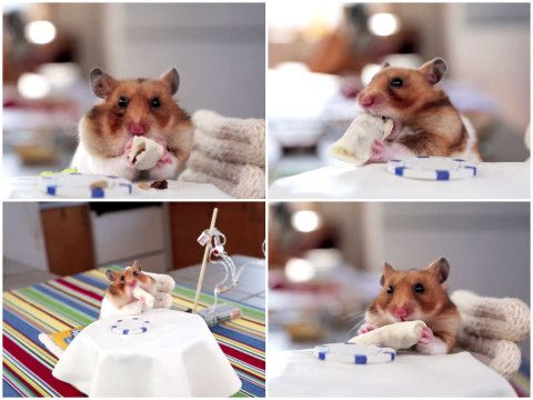 Here's a hamster eating tiny burritos. You're welcome