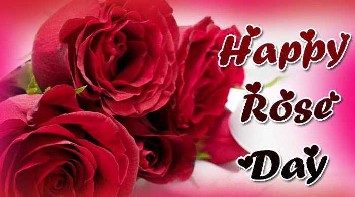 Rose Day Dp Images Of Rose Day Happy Rose Day Wallpaper Rose Day Shayari