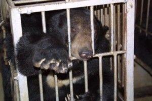L'amore di mamma orsa per la sua creatura