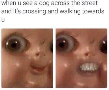 100 Pet Memes, die dich immer und immer wieder zum LOL bringen