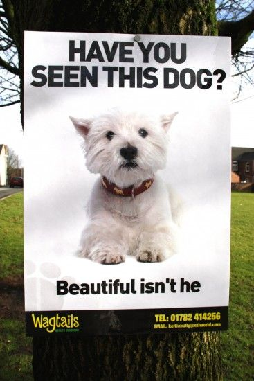 Wagtails Dog Grooming ad...I LOVE THIS! RedRover, we should do this for our area?