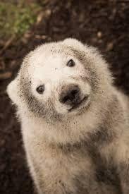 Bildergebnis für goddess polar bear