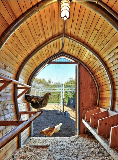 Broiler House Design For Sale: 17 Best Ideas About Inside Chicken Coop On Pinterest
