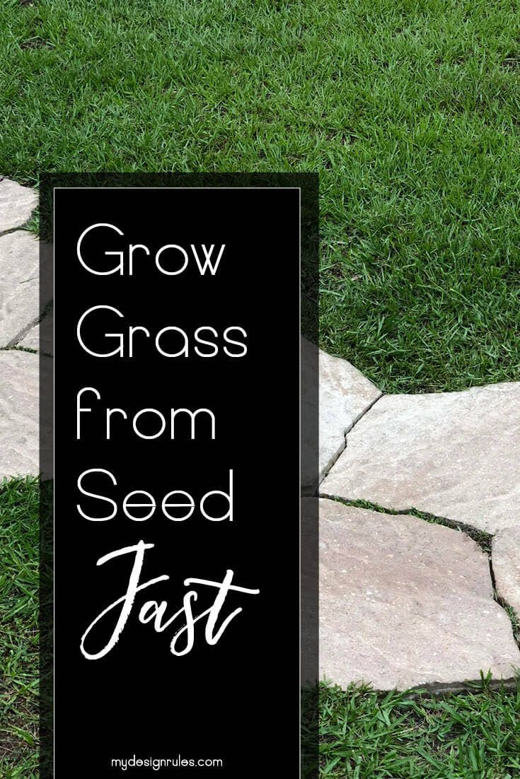 What I Ve Learned About Growing Grass Growing Grass Grow Grass In Shade Planting Grass