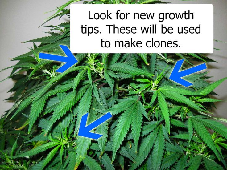 how to grow weed outdoors step by step pictures
