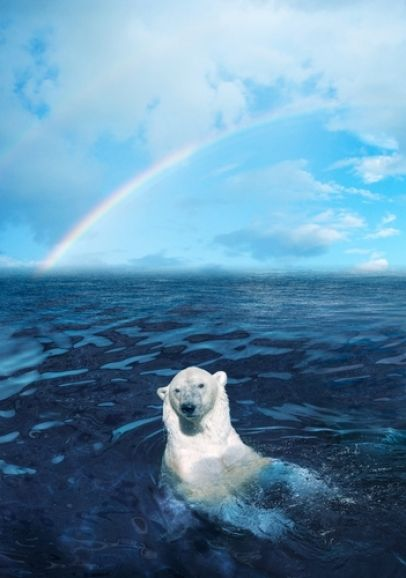 Polar bear, Alaska..♥ Beatiful