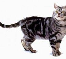 Animali: il gatto - articoli e suggerimenti