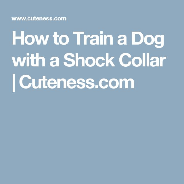How to Train a Dog with a Shock Collar   Cuteness.com