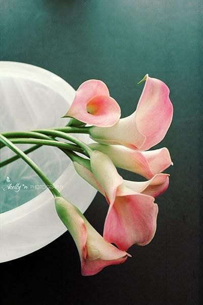 Cala Bowl- Flower Photography